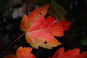autumn-1850717_640